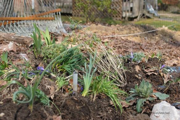 plant carnage