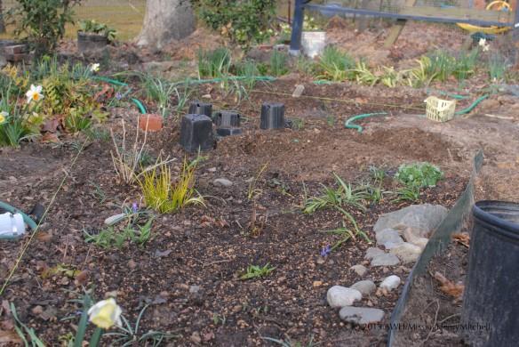 segment 3 replanted