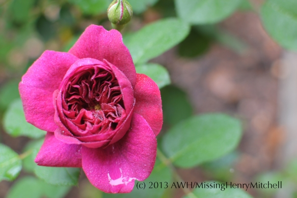 darcey bussell flower 1