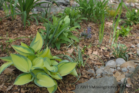 rain garden and misplaced june
