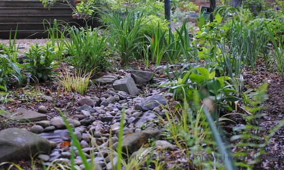 plants and creekbed cc