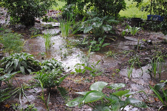 Rain garden processing its 5 inches of  rainfall on Friday.