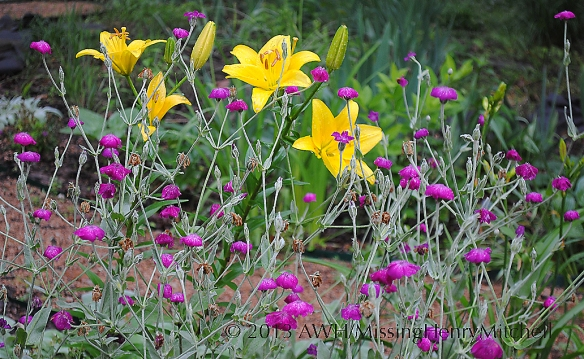 yellow lily and campion