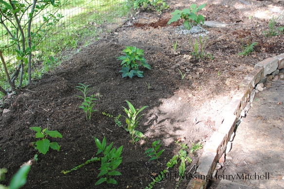 pathway garden phase 2 planted
