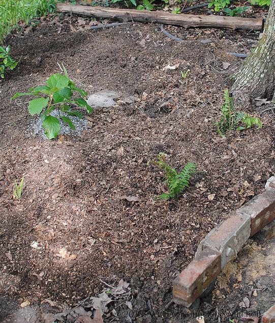 path garden planted 3
