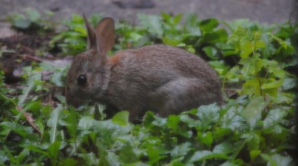 really small bunny