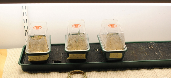separate seed-starting trays allow seven different plants to be started at once.