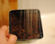 watering in cyclamen seed