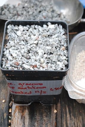 Vermiculite topped with chicken grit.