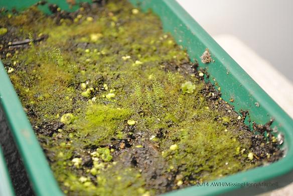 baby moss