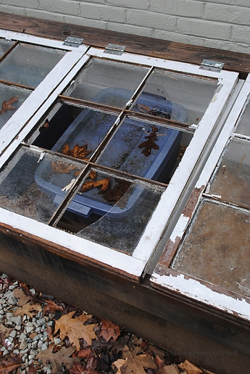broken window panes on my cold frame