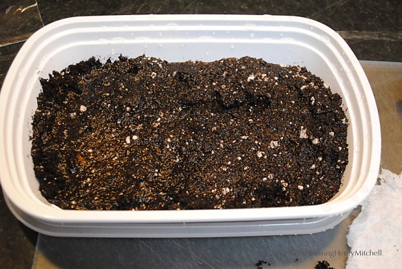 prepared seed flat