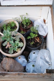 I've tucked the bagged leaves in gaps around the pots to reduce drafts.