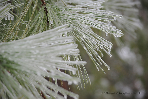 icy pine