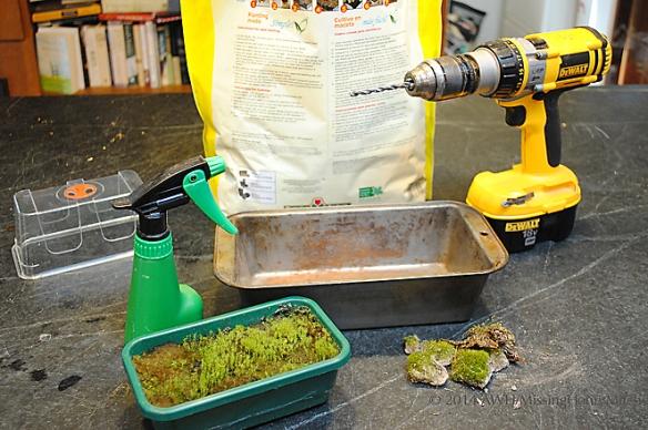 moss garden materials assembled