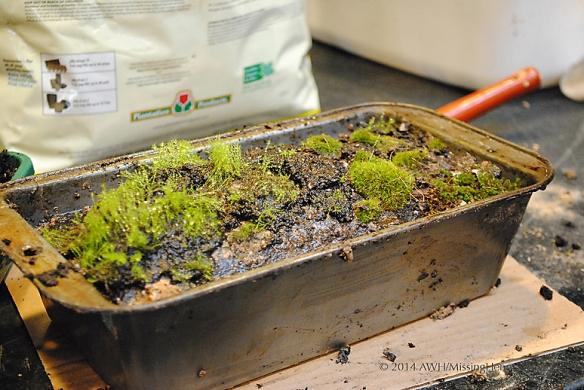 moss garden planted