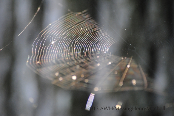 spider web catching the light