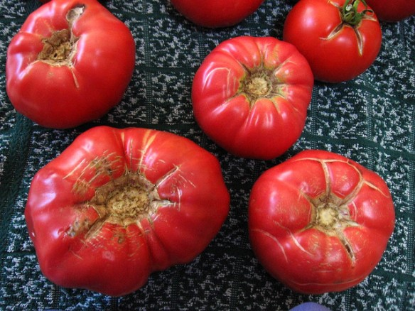 Brandywine tomatoes by rsgreen89, via Creative Commons 2.0.