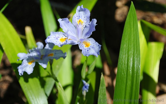 iris 'eco easter'