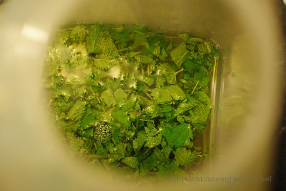 nettles submerged in container of water