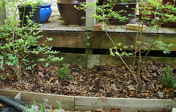The lingonberries and blueberries grow in a raised bed of native clay and decomposed pine bark.