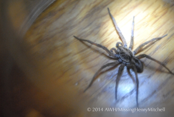 big scary spider 2