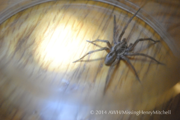 big scary spider aerial