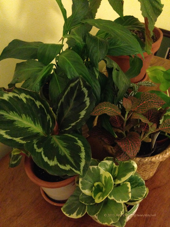 houseplant-collection-copy